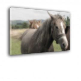 Koń - obraz na płótnie nr 2234
