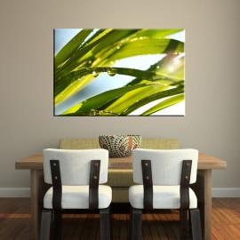 Trawa rosa - obraz na ścianę nr 2240