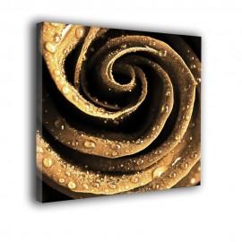Złota róża - obraz nowoczesny nr 2245
