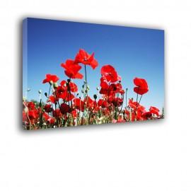 Czerwone maki na tle błękitnego nieba - obraz na ścianę nr 2277