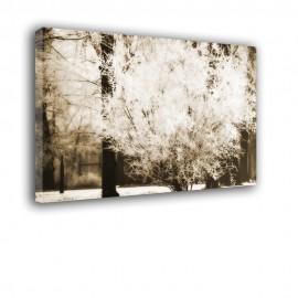 Krzak zimą w sepii - obraz na ścianę nr 2279