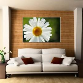 Kwiat Margerytki - obraz na ścianę drukowany na płótnie nr 2308
