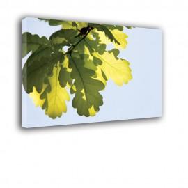 Dębowe liście w słońcu - obraz na płótnie nr 2323