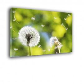 Białe dmuchawce - obraz nowoczesny kwiaty nr 2388