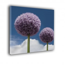 Kwiat czosnku - obraz na płótnie nr 2369