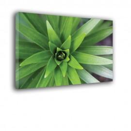 Zielone liście gwiazdy - obraz na płótnie nr 2327