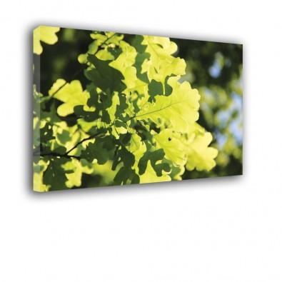 Zielone liście na drzewie - obraz na ścianę nr 2342