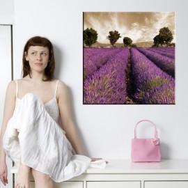 Pole lawendy - obraz na ścianę nr 2346