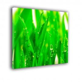 Liście trawy z rosą - obraz nowoczesny nr 2358