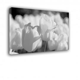 Białe tulipany - obraz na płótnie nr 2366