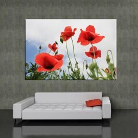 Letnie maki - obraz na ścianę nr 2382