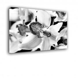 Czarno biały storczyk - obraz na płótnie nr 2386
