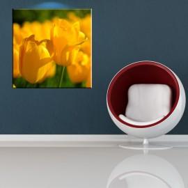 Kwadratowe tulipany - obraz nowoczesny kwiaty nr 2396