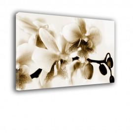 Brązowy kwiat orchidei - obraz nowoczesny nr 2402