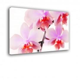 Różowe kwiaty orchidei - obraz nowoczesny nr 2403