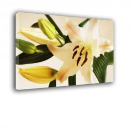 Lilia - obraz na ścianę nr 2415