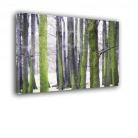 Pnie drzew - obraz nowoczesny nr 2423