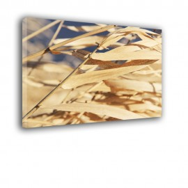 Sucha trzcina - obraz nowoczesny nr 2431