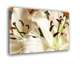 Liliowa świerzość - drukowany na płótnie obraz na ścianę nr 2435