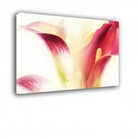 Kalia - drukowany na płótnie obraz na ścianę nr 2436