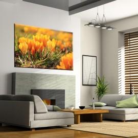Żółte krokusy - obraz na ścianę nr 2437