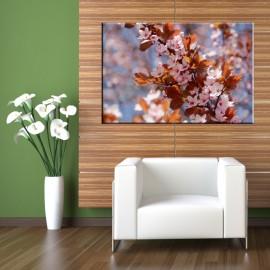 Kwiaty wiśni - obraz na ścianę nr 2458