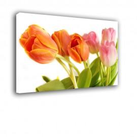 Wiązka tulipanów - obraz na ścianę nr 2600