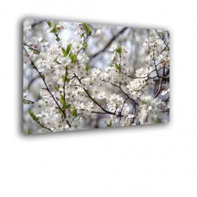 Białe kwiatki na gałązce - obraz na ścianę nr 2463