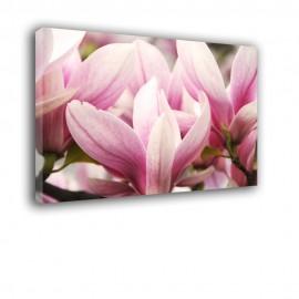 Kwiaty Magnolii - obraz na ścianę nr 2472