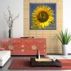 Słonecznik w kwadracie - obraz nowoczesny kwiaty nr 2483