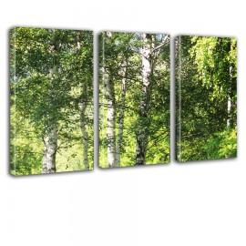 Brzozowe gałęzie - obraz na płótnie tryptyk nr 2635