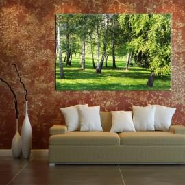 Brzozowy las - obraz na ścianę nr 2510