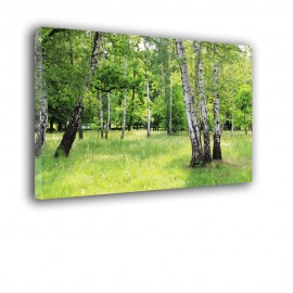 Brzozowy park - obraz na płótnie nr 2520