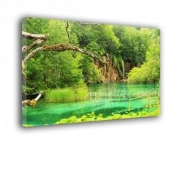 Stare drzewo nad jeziorem - obraz nowoczesny nr 2521