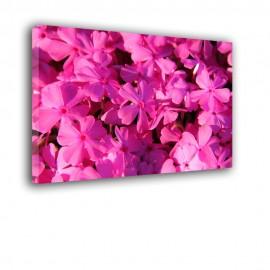 Kwiaty bzu nr 2524