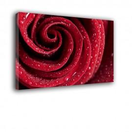 Czerwona róża - obraz nowoczesny kwiaty nr 2061