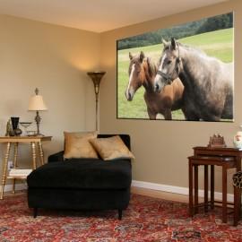 Konie - obraz nowoczesny zwierzęta nr 2065