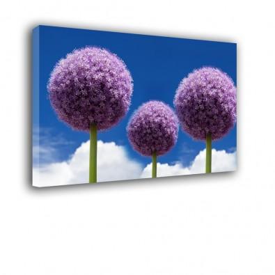 Czosnek - obraz nowoczesny kwiaty nr 2068