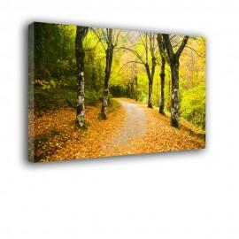 Jesienny park - obraz nowoczesny nr 2070