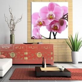 Różowa orchidea - obraz na ścianę do salonu nr 2042