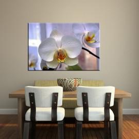 Orchidea w oknie - obraz nowoczesny kwiaty nr 2101