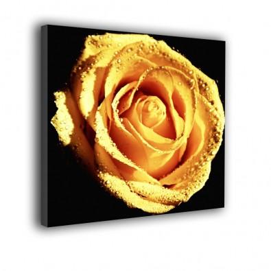 Herbaciana róża - obraz nowoczesny - kwiaty nr 2142