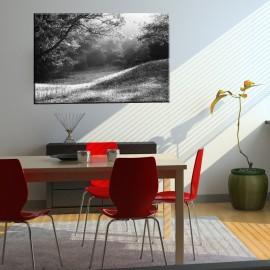 Czarno biała polana - obraz na ścianę nr 2143
