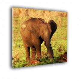 Mały słoń - obraz na ścianę nr 2157