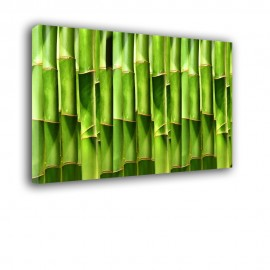 Pędy bambusa - obraz na ścianę do kuchni nr 2159