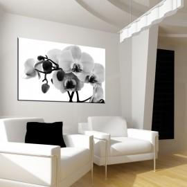 Orchidea czano biała - nowoczesny obraz kwiaty nr 2160