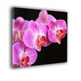Różowa orchidea - obraz nowoczesny kwiaty nr 2171