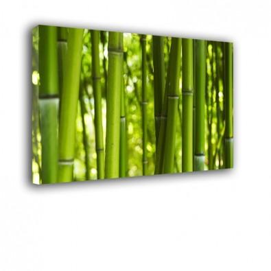 Bambusy obraz na ścianę nr 2218