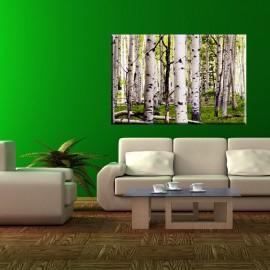 obraz na ścianę brzozy