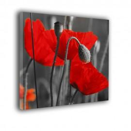 Maki czarno białe z czerwonym akcentem - obraz na płótnie nr 2281